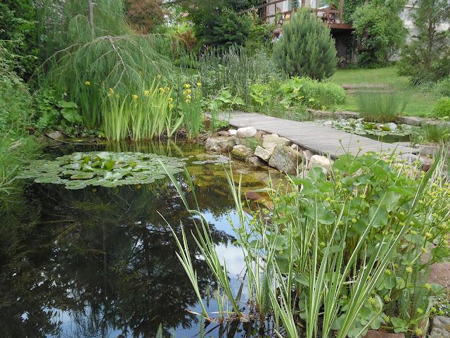 oczko wodne, sadzawka w ogrodzie