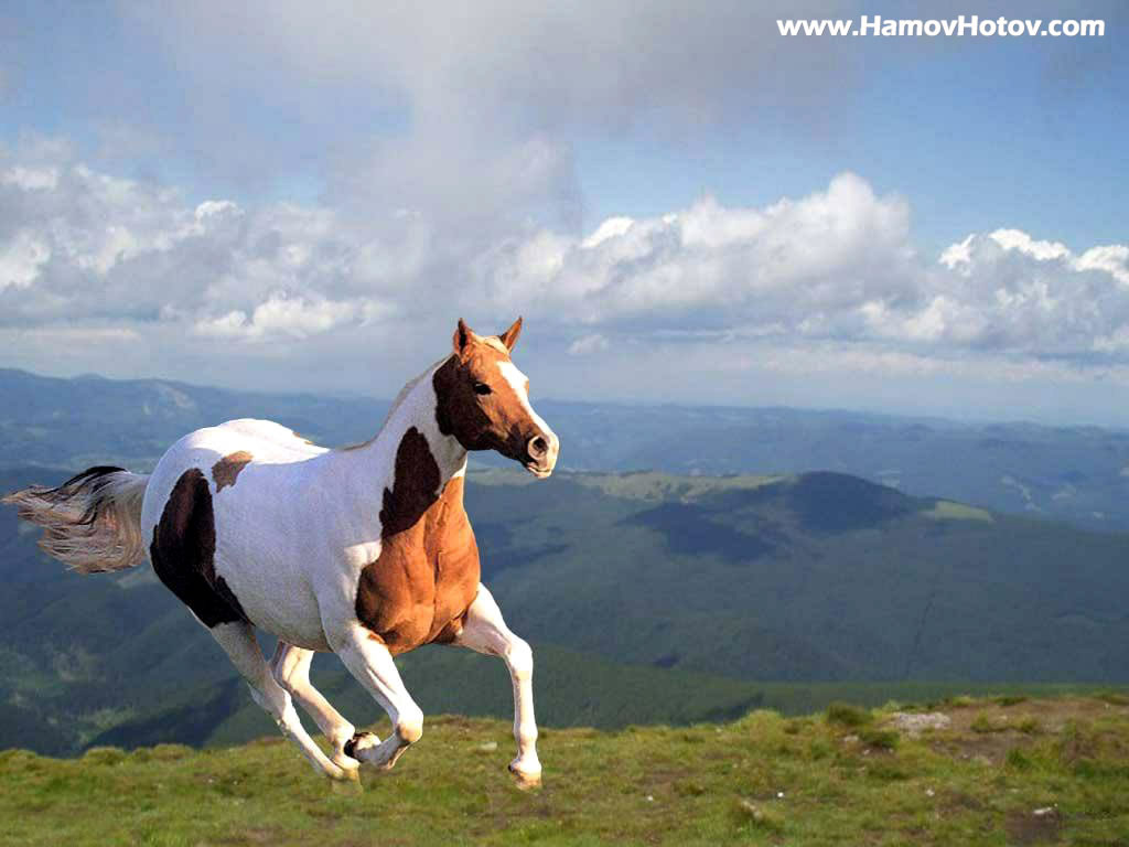 FULL WALLPAPER: Beautiful Horse - photo#19