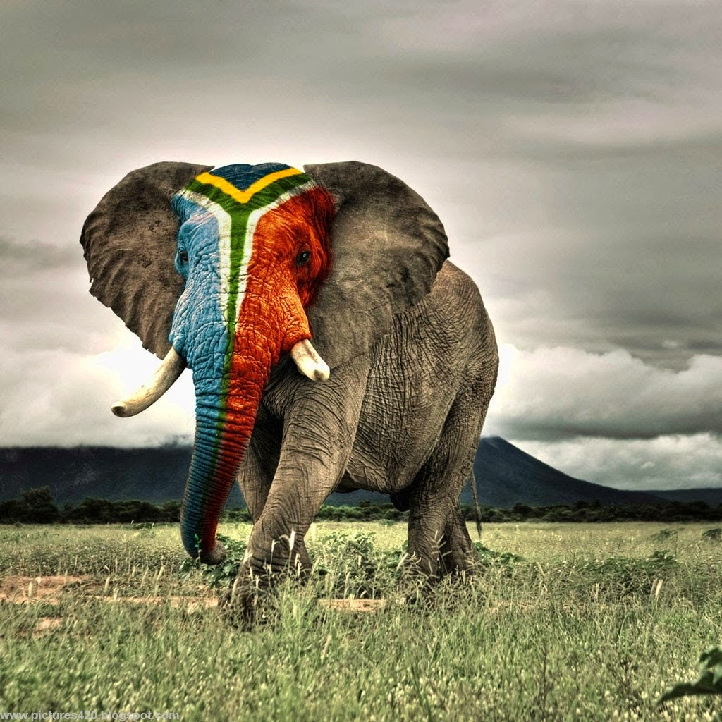 Elephant Wallpaper Free Download | MAYDANG