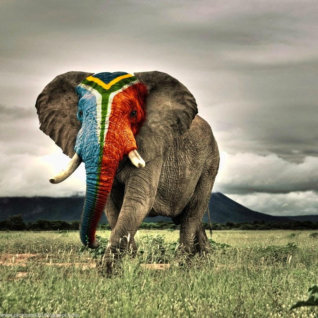 Elephant Wallpaper Free Download | MAYDANG