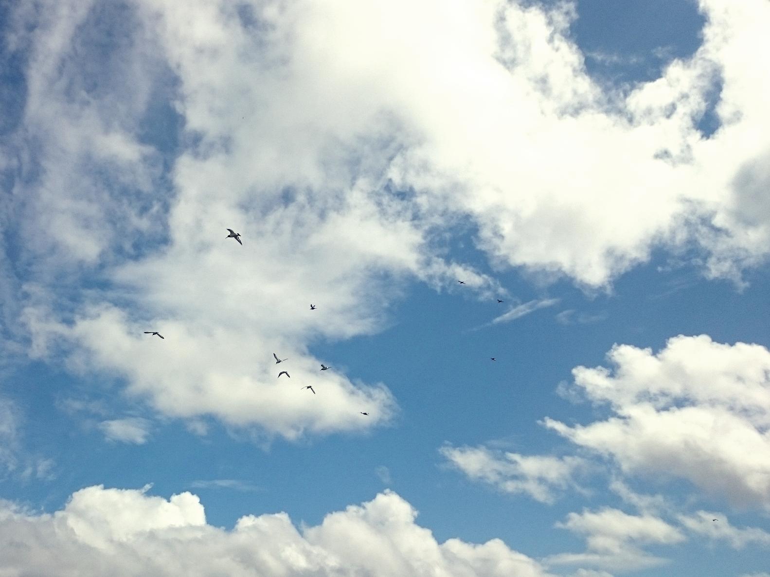 ptaki, niebo, chmury, marzenia, panidorcia, Pani Dorcia