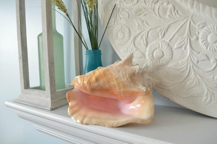 Bahama Conch Shell