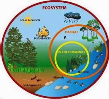 Pengertian Dan Contoh Ekosistem