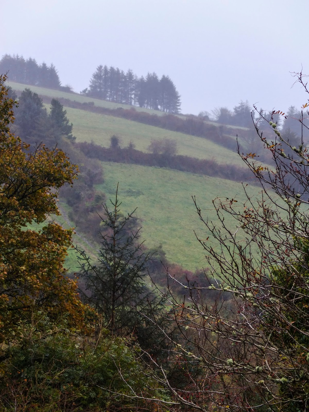 An autumn landscape on a foggy day in the Boggeragh Mountains in North Cork.
