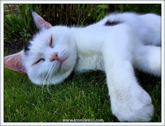 Smooch's Supurr Chill Garden Selfie ©BionicBasil® The Sunday Selfies