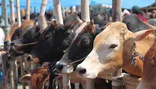 एक महत्वपूर्ण जानकरी - गाय पालने के वैज्ञानिक,आध्यत्मिक,धार्मिक और सामाजिक महत्व | Gyansagar ( ज्ञानसागर )