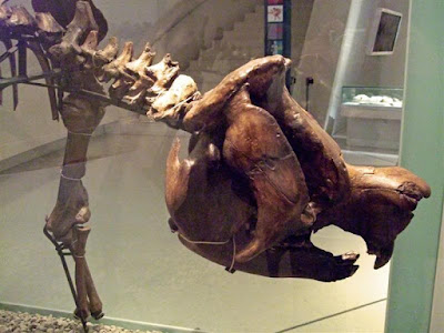 Catalogue of Organisms: The Diprotodontids: Marsupials Go ...
