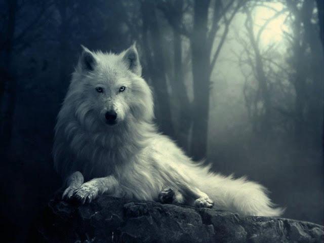 wallpaper wolf 3d