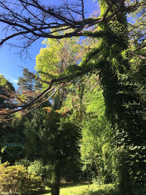 arbres vert vif sous un ciel bleu
