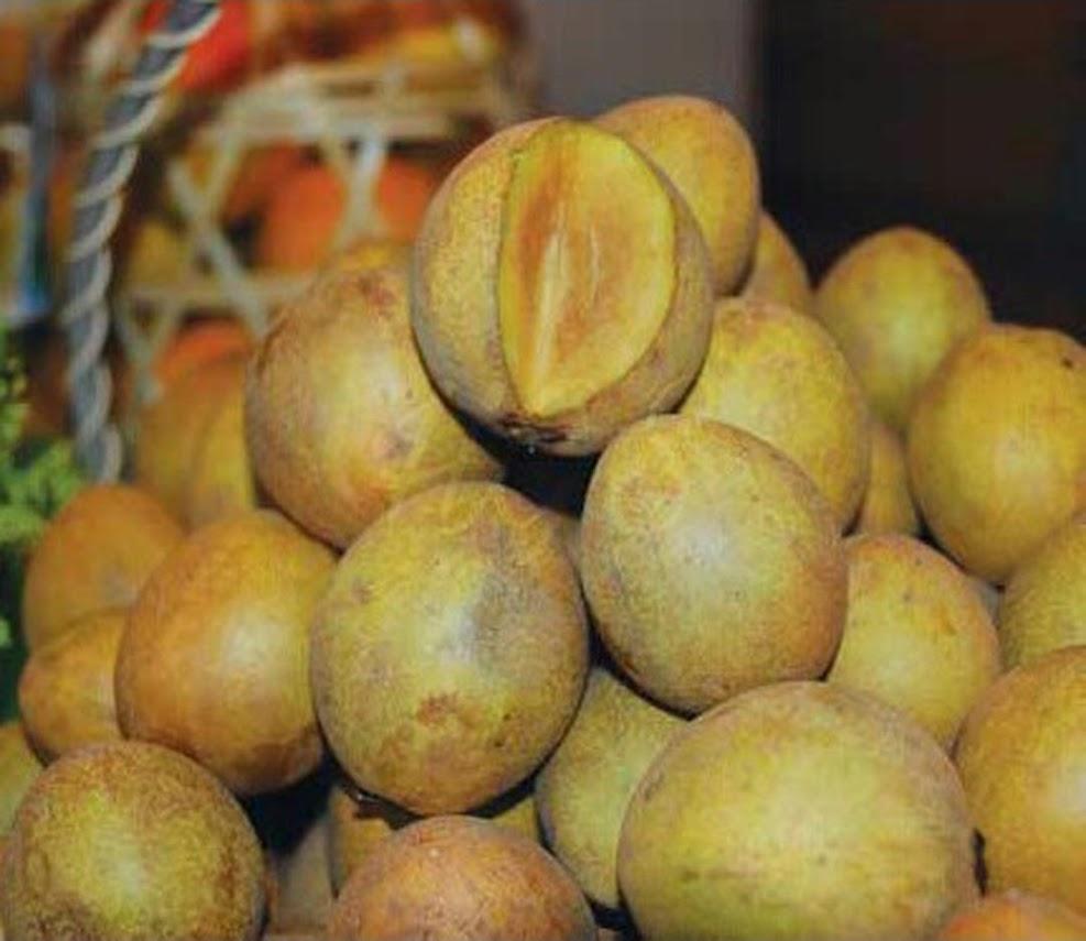 Bibit Tanaman Buah Sawo Honey Kalimantan Timur