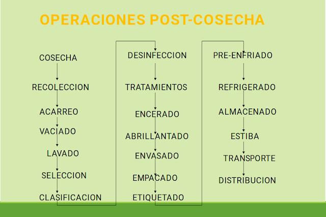 OPERACIONES POST-COSECHA