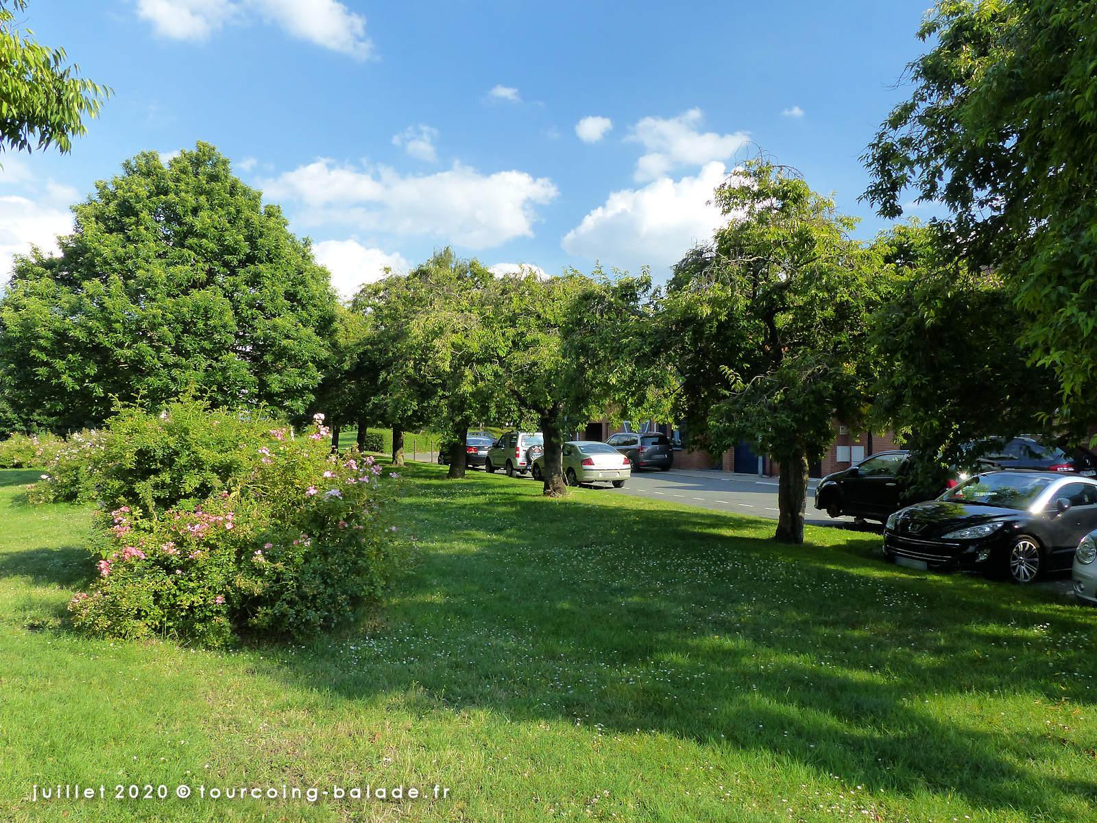Végétalisation Tourcoing - Allée des Cerisiers, 2020