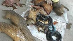 Tại sao ngày nay con người mắc phải nhiều bệnh có vật chủ là động vật hoang dã