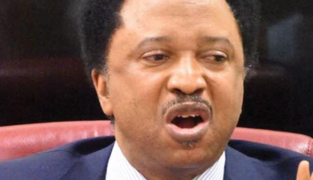 Don't expect change under Buhari in 2020 – Shehu Sani