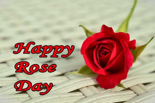 happy-rose-day-640-440
