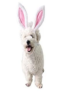 Hundekostüm Ostern