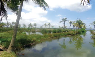 backwater canal