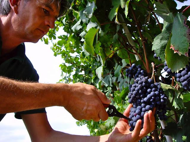 Selectie door wijnprofessionals rechtstreeks bij de wijnboer