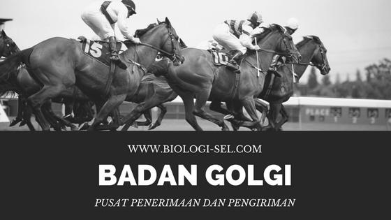 Badan Golgi (fungsi)