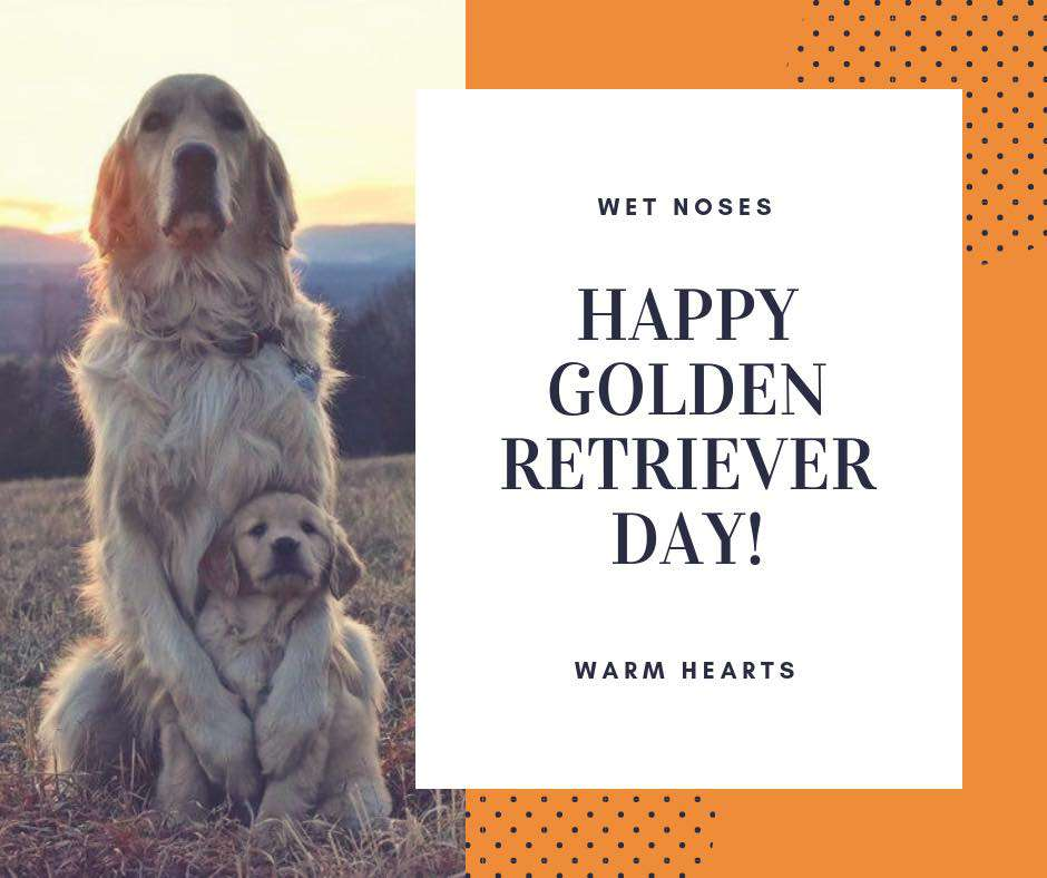 National Golden Retriever Day Wishes Pics