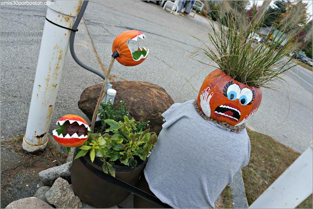 Calabazas Carnívoras en el Return of the Pumpkin People de Jackson en New Hampshire