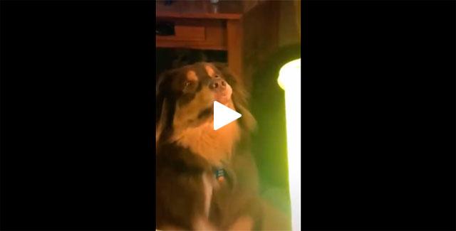 https://www.ahnegao.com.br/2019/11/a-luz-capaz-de-hipnotizar-um-cachorro.html