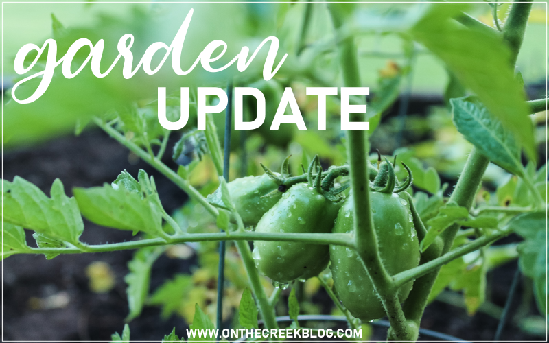 Garden update for July 2019! | On The Creek Blog