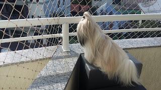 escadinhas para cães