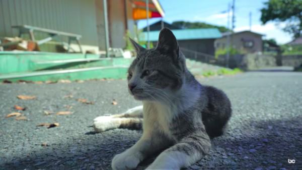 cat island history