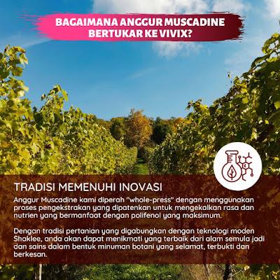 Bagaimana Anggur Muscadine Bertukar Ke Vivix ?