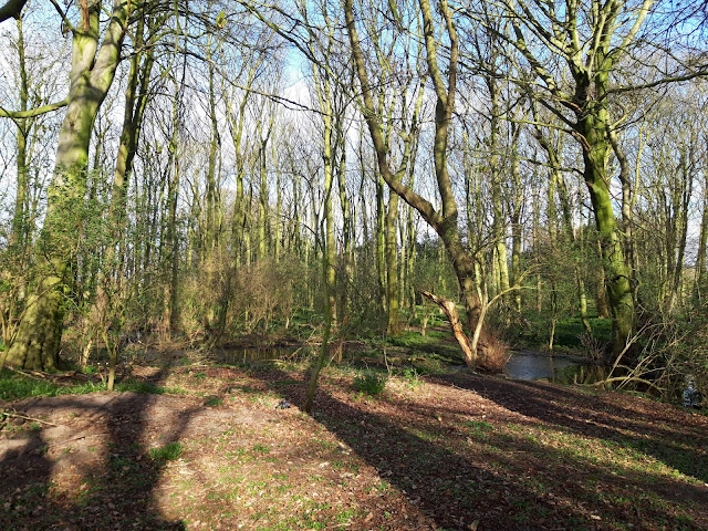 Image shows a wooded area.  The sun has created shadows on the ground