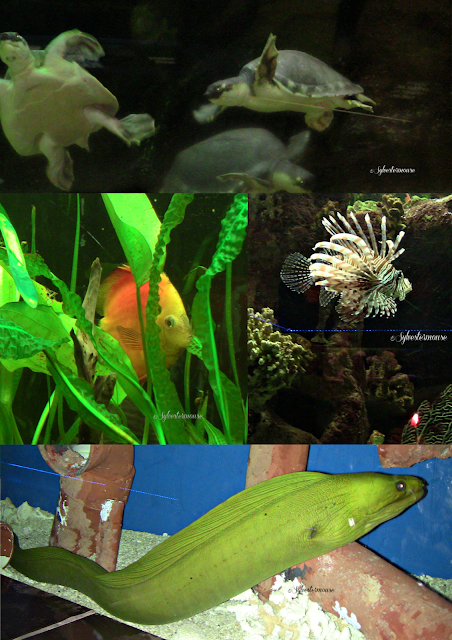 The Memphis Zoo Review - Aquarium Photos by Cynthia Sylvestermouse