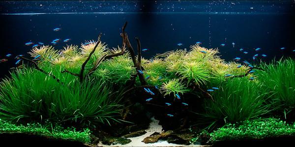 Nature Style Aquascape