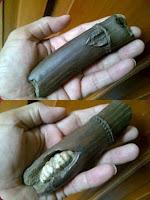 Fosil Bambu Khusus Penglarisan Usaha