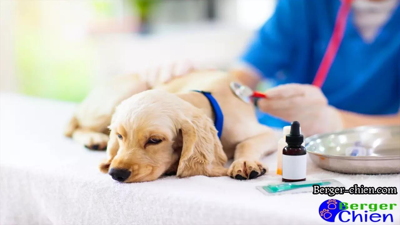 Lymphome chez le chien