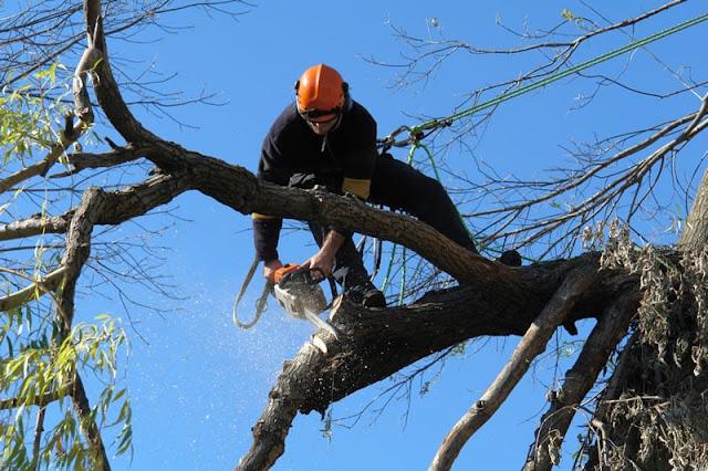 tree-removal-royal-oak-mi