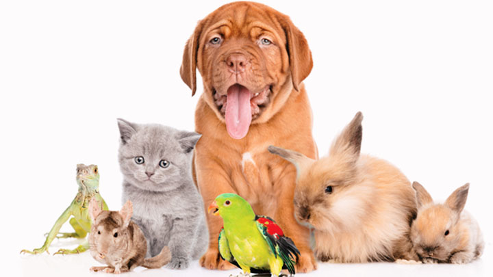 pets first veterinary center