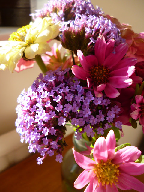 Cut Flowers Zinnia and Verbena and Aster