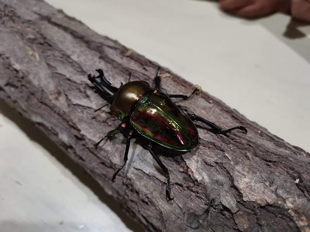 長崎市鳴見台にある昆虫館カブクワスタイルへ行ってきました!
