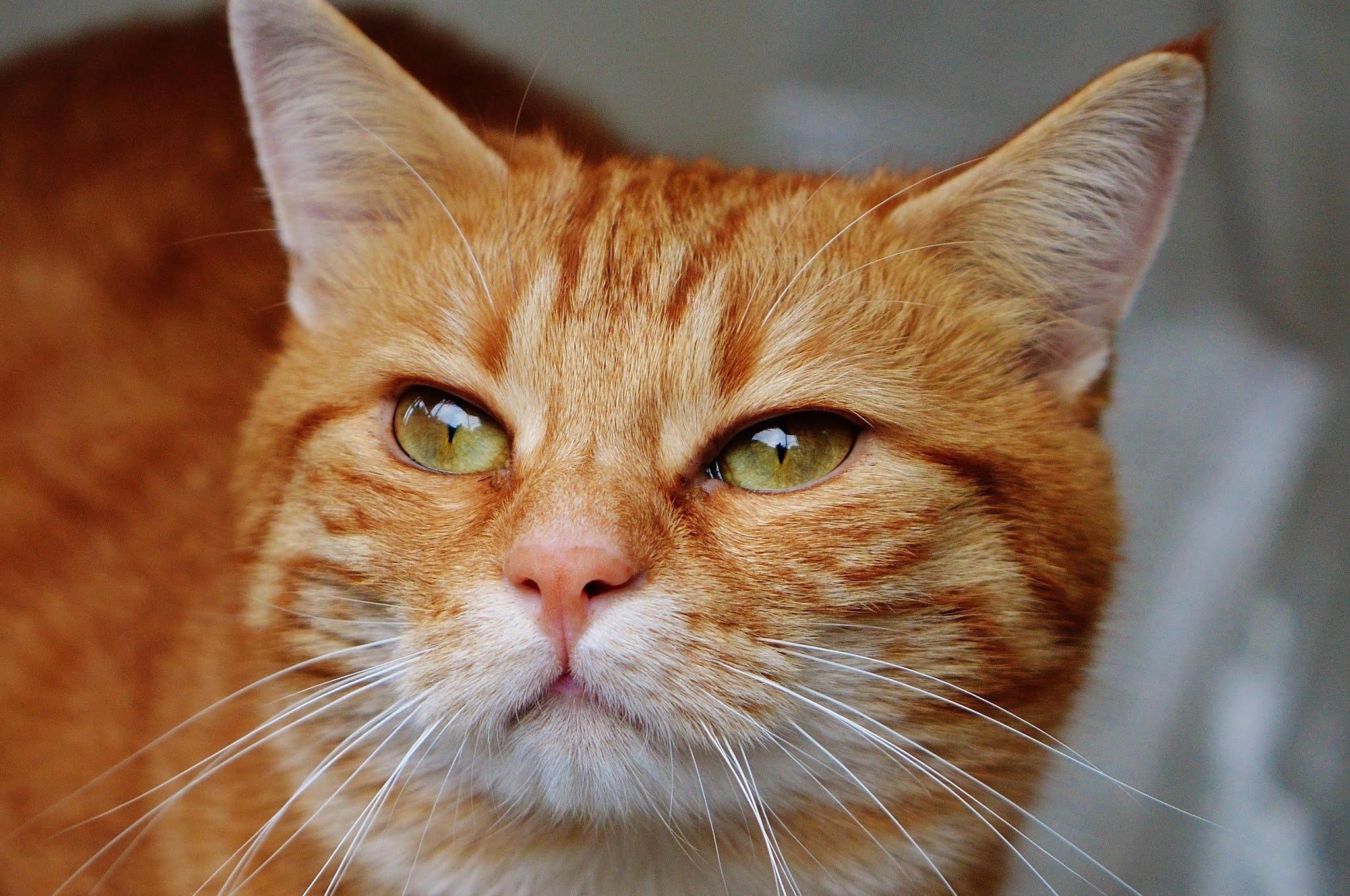 Apakah Kucing Keracunan Bisa Sembuh Sendiri Binatangmu