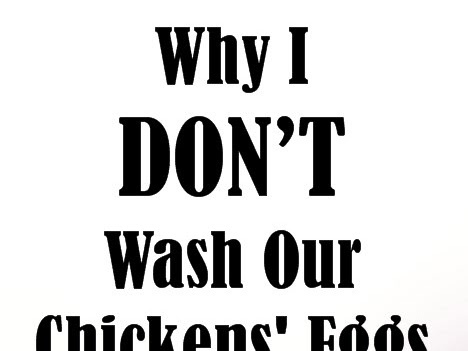 Why I Don't Wash Our Chickens' Eggs