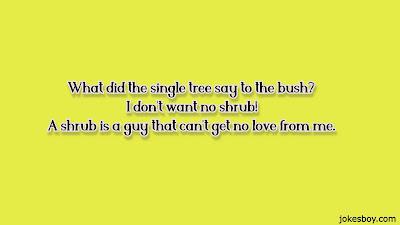Funny Tree Puns