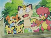 Meowth y sus amigos