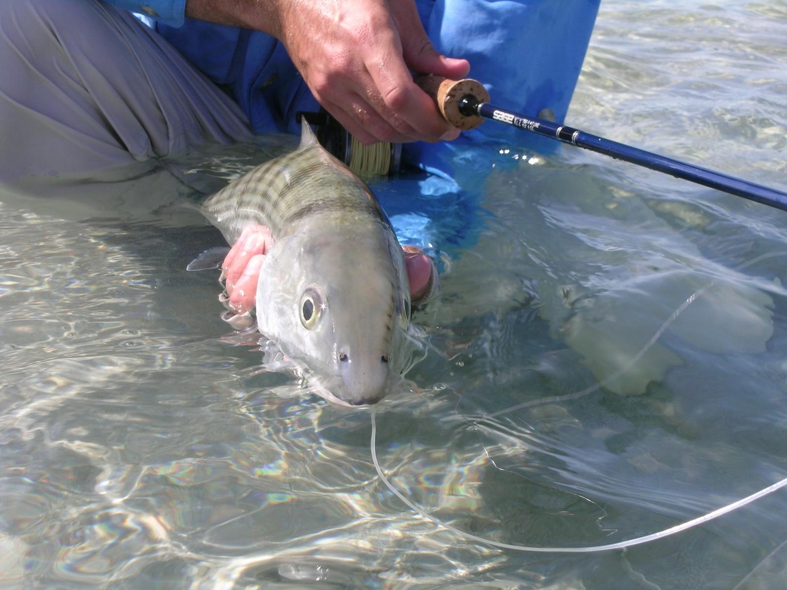 Рыбалка на костных рыб на Багамах