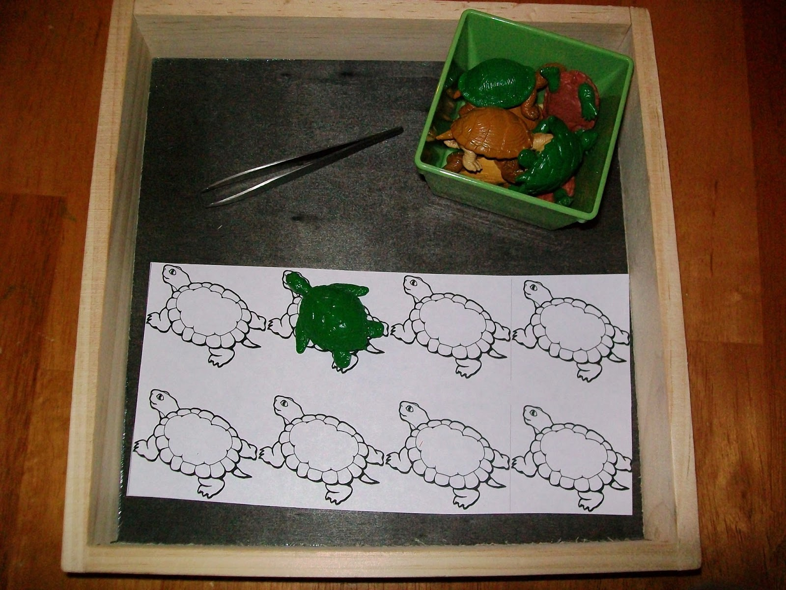 Reptiles Amp Amphibians