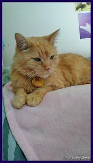 Carmine hangs out on a pink fleece cat blanket.
