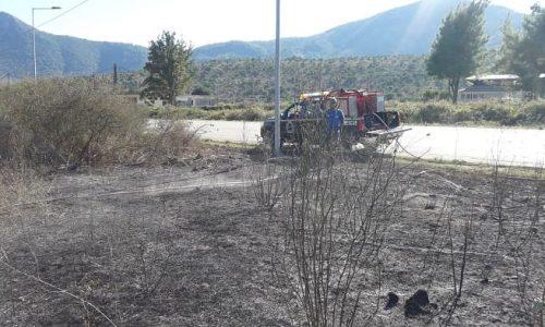 Υπό πλήρη έλεγχο τέθηκε η φωτιά στο Θεσπρωτικό η οποία από το απόγευμα της Πέμπτης κινητοποίησε ισχυρές δυνάμεις της Πυροσβεστικής.