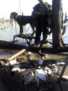 dead timber north texas duck hunt