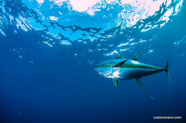 ascension island spearfishing dreams