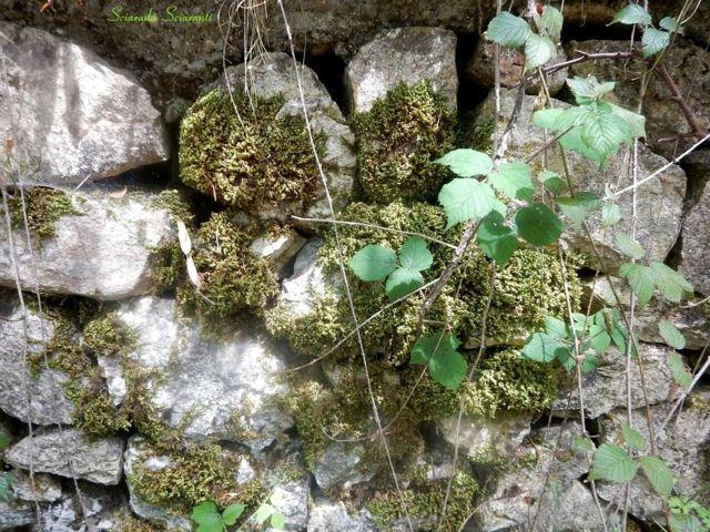 Lastre di pietra lise